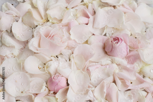 Foto auf Leinwand Blumen rose flower petals on marble - wedding, holiday and floral garden styled concept