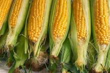 Raw Fresh Corn For Boiling At ...
