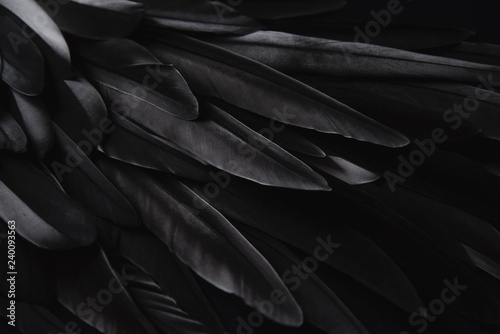 Photographie Black wing feathers detail, abstract dark background