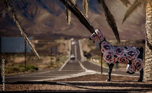 Wall Murals Ostrich Fuerteventura