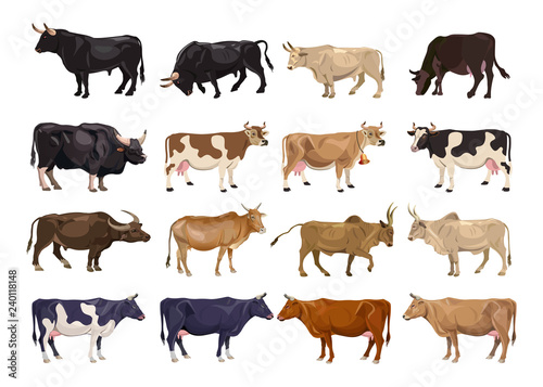 Cattle breeding set Fotobehang
