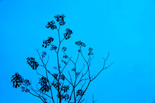 Branches And Leaves Blue Sky