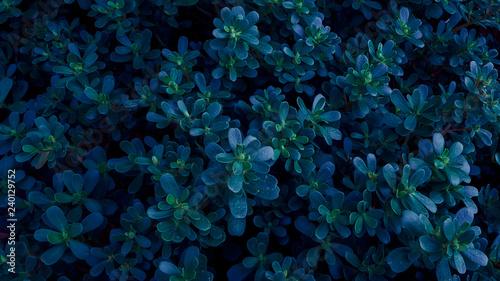 Photo  Alien Plants