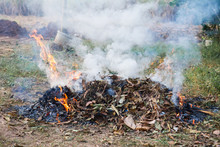 Burn Fire Dry Leaf In Garden