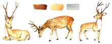 Large Set Of Wild Deer.