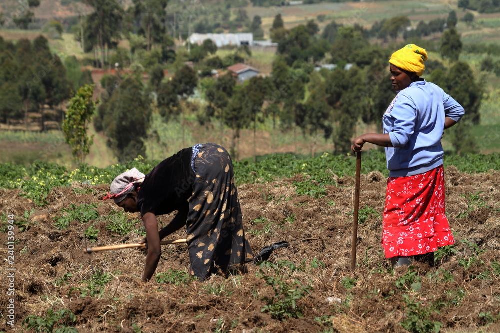 Fotografie, Obraz  Ackerbau und Landwirtschaft in Kenia