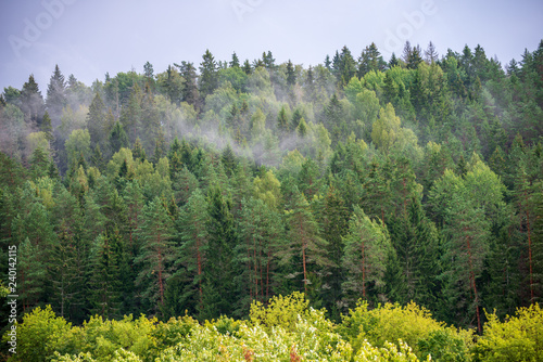 autumn forest landscape with colored trees and misty weather