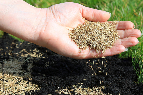 Stampa su Tela spreading grass seed by hand