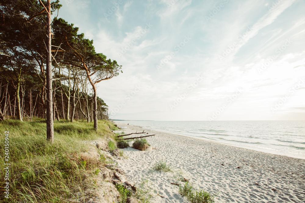 Fototapety, obrazy: Weststrand on the peninsula Fischland-Darß