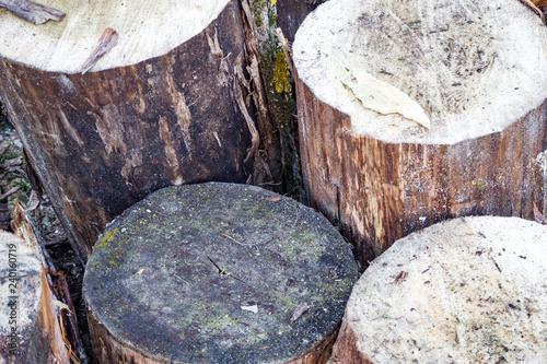Fototapety, obrazy: log, logs, old tree, sawn tree, logs on the ground, tree bark,