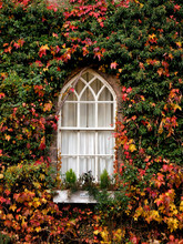 Window Surrounded By Autumn Le...