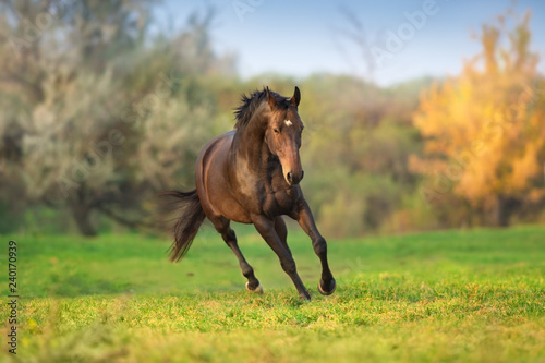 Horse in motion in autumn landscape