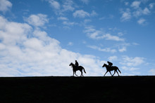 Two Horses After Working On Th...