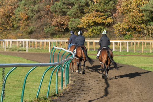 Three horses after working on the Warren Hill racehorse training gallops at Newmarket, England Fototapeta