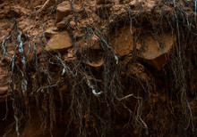 Abstract Roots In The Rocky Red Dirt