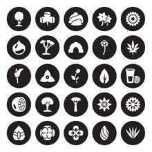 25 Vector Icon Set : Cypress, Almond, Alstroemeria, Anemone, Anthurium, Cannabis, Birch, Baobab, Bergamot, Chestnut, Cliff, Clover Isolated On Black Background.