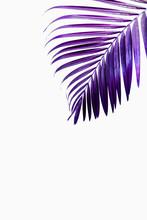 Purple Tropical Palm Leaf Against White Wall
