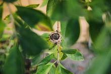 Hummingbird Nestlings In Tiny ...