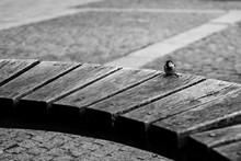 Sparrow On A Bench
