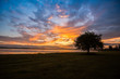 one tree landscape / beautiful tree sunset standing near the river and beautiful sunrise or sunset