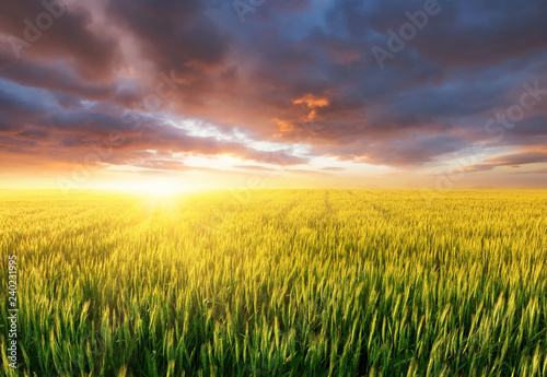 Photo Stands Melon Field during sunset. Agricultural landscape at the summer time. Industrial landscape as a background. Farm landscape during sunset.