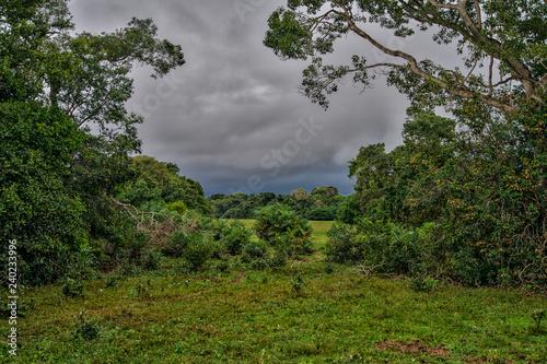 Fotografija  Pantanal Wetlands