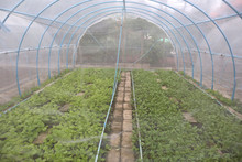 Planting Vegetable Tents