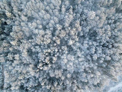Fotografia, Obraz  Aerial View of Snow Covered Forest