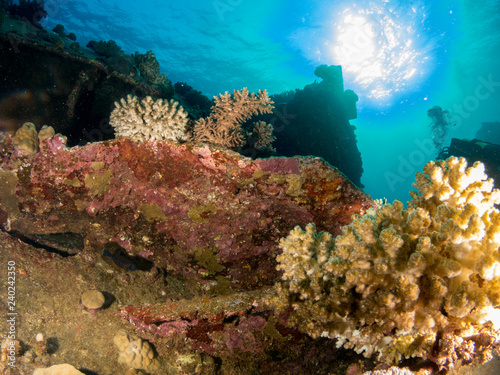 Poster Coral reefs sunken ship with under the sea