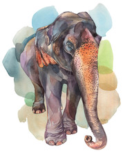 An Asian Elephant. Hand Painted Watercolor Illustration On Withe Background.