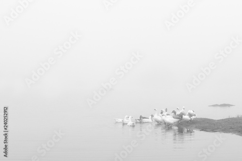 Fotografía  Landscape with fog and ducks in the natural park of the Barruecos