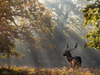Roe Deer Stag In The Sunbeams