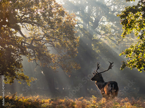 Deurstickers Ree Roe Deer Stag In The Sunbeams