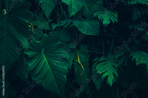 Nature leaves green background in garden at spring Fototapeta