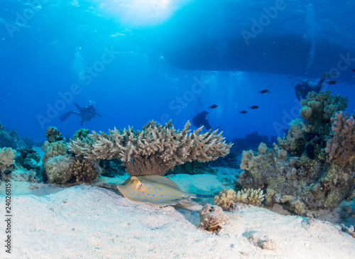 Plakat dno morskie z wieloma rybami