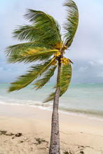 Tropical Storm At The Beach Of Grand Baie In Mauritius.