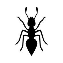 Black Ant On White Background ...