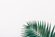 canvas print picture - Simple flat lay composition of one palm leaf