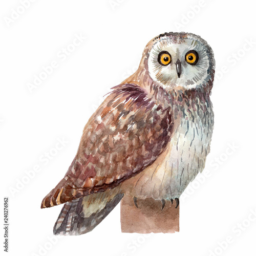 Aluminium Prints Owls cartoon Watercolor owl