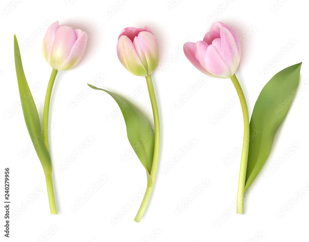 Fototapety, obrazy: Set of decorative flowers isolated on white background. Vector pink tulip for spring holidays decor