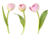 Fototapeta Tulips - Set of decorative flowers isolated on white background. Vector pink tulip for spring holidays decor