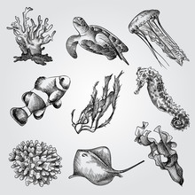 Hand Drawn Underwater World Elements Sketches Set. Collection Of Corals, Seaweed , Scat, Jellyfish, Sea Turtle, Sea Horse And Fish Sketches On White Background. Engraving Style Pen Pencil Crosshatch.