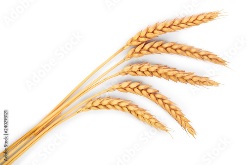 Obraz ears of wheat isolated on white background. Top view - fototapety do salonu