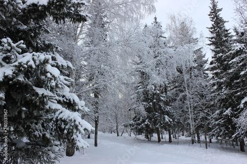Obraz na plátně Forest in the white snow.