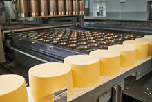 Industrial Cheese Production. Dairy Industry