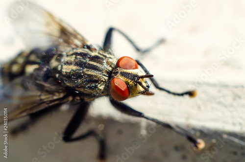 Photographie fly