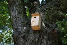 A House For Birds And Bats In The Park.