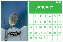 January 2019 Calendar On English With A Bird Perched On A January Decorated Fence, Landscape Orientation