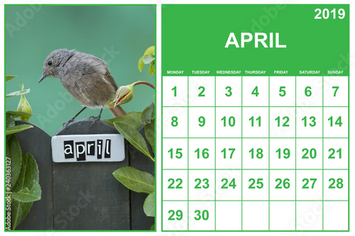 Fotografie, Obraz  April 2019 calendar on english with a bird perched on an April decorated fence,