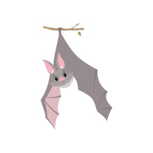 Funny Bat Hanging Upside Down On A Branch Wrapped, Gray Creature Monster Cartoon Character Vector Illustration On A White Background